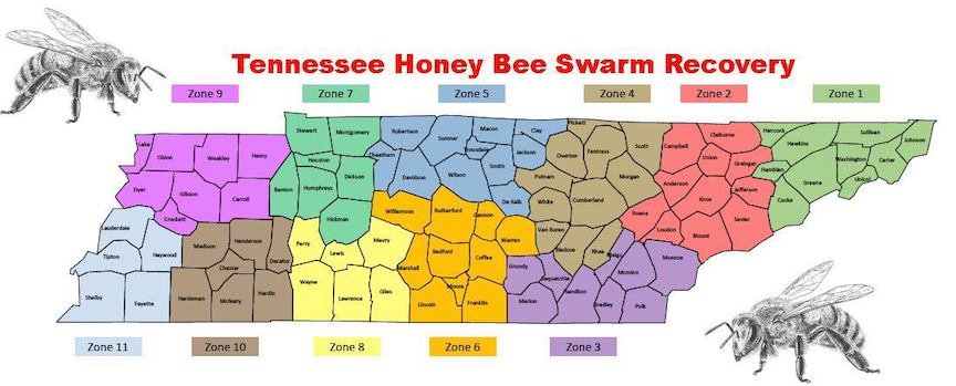 Tennessee's Honey Bees Swarm Recovery